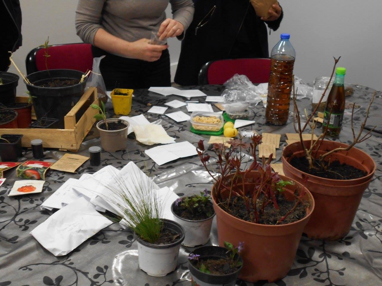 graines et plants sur une table