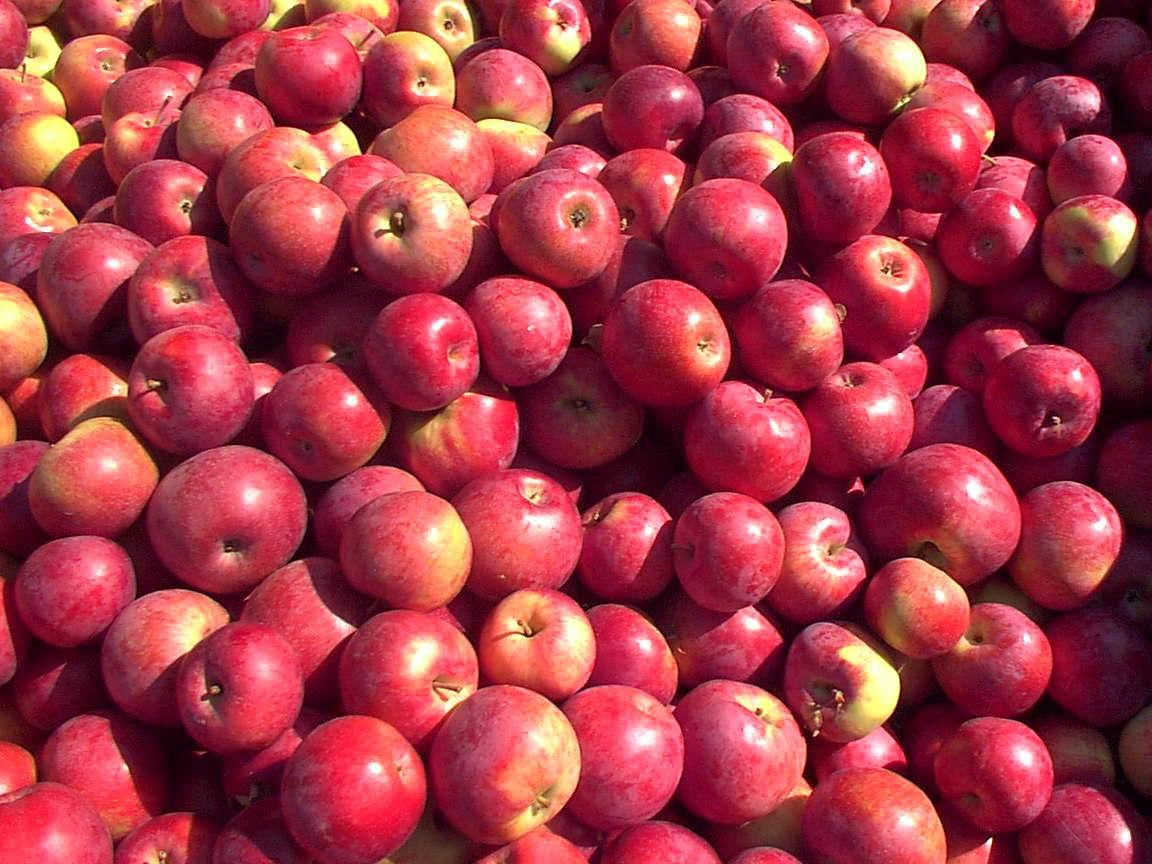 pommes-rouges.jpg